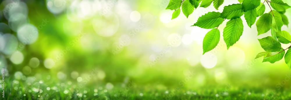 Fototapety, obrazy: Grüne Blätter verzieren einen breiten Bokeh  Hintergrund aus Glanzlichtern in der Natur