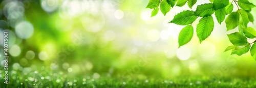 Poster Spring Grüne Blätter verzieren einen breiten Bokeh Hintergrund aus Glanzlichtern in der Natur