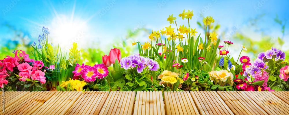 Fototapety, obrazy: Spring flowers in garden