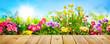 Spring flowers in garden