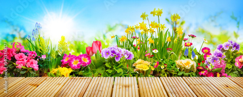 Obraz Spring flowers in garden - fototapety do salonu