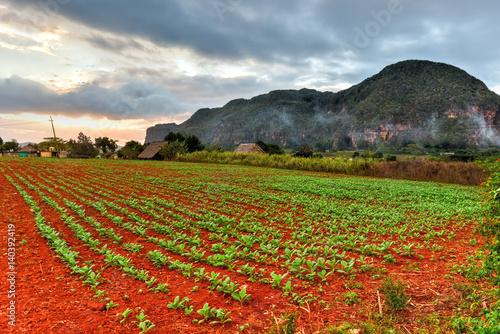 Tobacco Plantation - Vinales Valley, Cuba Canvas Print