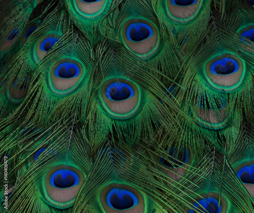 Foto op Aluminium Pauw Peacock Feather Close Up with navy and royal blue, brown and chartreuse coloring. Fractals make feathers shimmer.