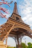 Fototapeta Fototapety z wieżą Eiffla - Eiffel Tower in Paris at spring, France