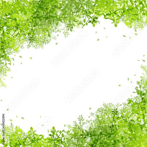 Láminas  光りと緑の葉