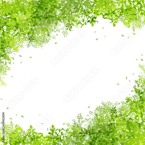 Fotografía  光りと緑の葉