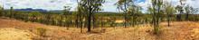 Panorama Of Australian Bush