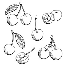 Cherry Graphic Black White Isolated Sketch Illustration Vector