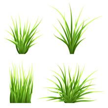 Set Realistic Vector  Grass. B...
