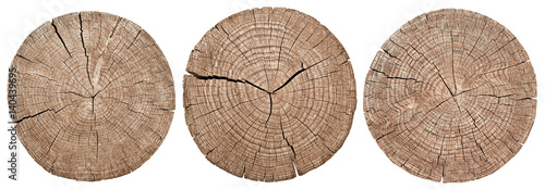 Fotografie, Obraz  Cross section of tree trunk showing growth rings on white background