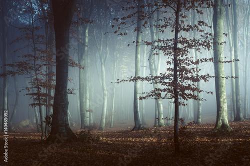 Spooky light in misty forest