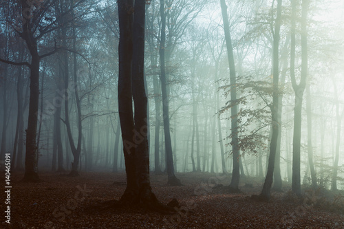 Papiers peints Forets Spooky light in misty forest