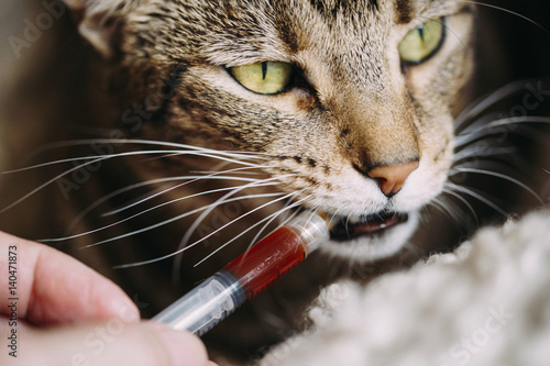 Cat health with CBD tinctures Poster