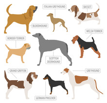 Hunting Dog Breeds Collection ...