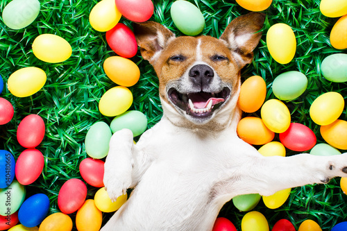 Aluminium Prints Crazy dog easter bunny dog with eggs selfie