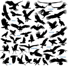 Birds Of Prey Vector Silhouettes Collection