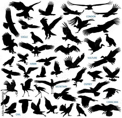 Birds of prey vector silhouettes collection Wall mural