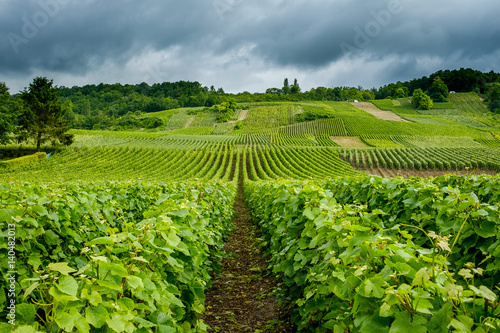 Foto auf Gartenposter Weinberg Rows of vines in champagne vineyard Venteuil Epernay Marne France