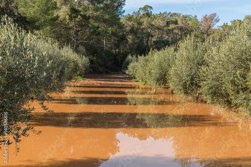 Photo Översvämmad olivodling efter skyfall