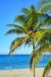 Palme am Strand, Varadero, Kuba