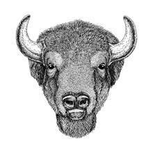 Wild Bison Large Mammal Hand Drawn Illustration