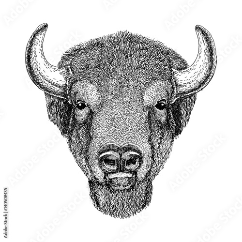 Fototapeta  Wild Bison Large mammal Hand drawn illustration