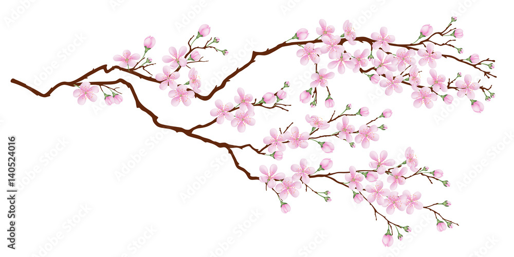 Fototapety, obrazy: Horizontal branch of cherry blossoms. Realistic vector illustration on isolated background.