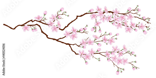 Fotografie, Obraz  Horizontal branch of cherry blossoms
