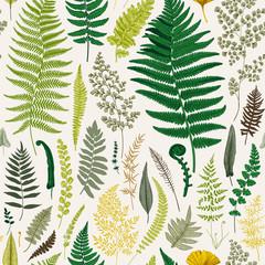 Fototapeta Eko Seamless pattern. Ferns. Vintage vector botanical illustration. Colorful