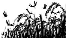 Locusts On Rice