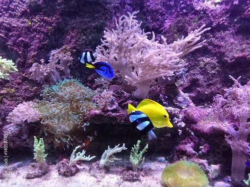 Photo  dory and nemo in aquarium