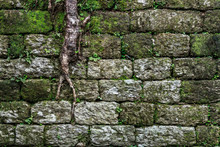 Old Brick Wall With Moss And R...