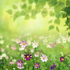 Fototapeta Beauty summer meadow with blooming flowers, seasonal abstract backgrounds