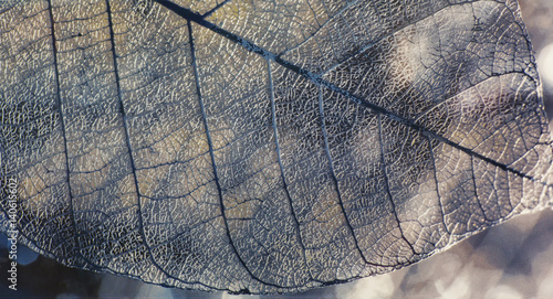 Autocollant pour porte Les Textures Tile, texture of leaves