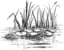 Vector Illustration With Reed And Water Lilies In The Pond.