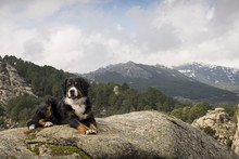 Dog Rests On The Rock At The Top Of The Mountain Contemplating A Beautiful Landscape