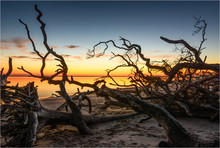 Boneyard Sunrise