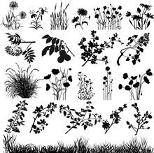 Plants Desing Elements