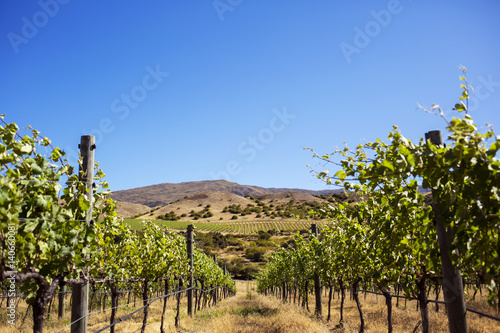 Papiers peints Vignoble Plants growing in vineyard against clear sky on sunny day