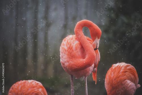 Foto op Aluminium Flamingo Flamingos during winter
