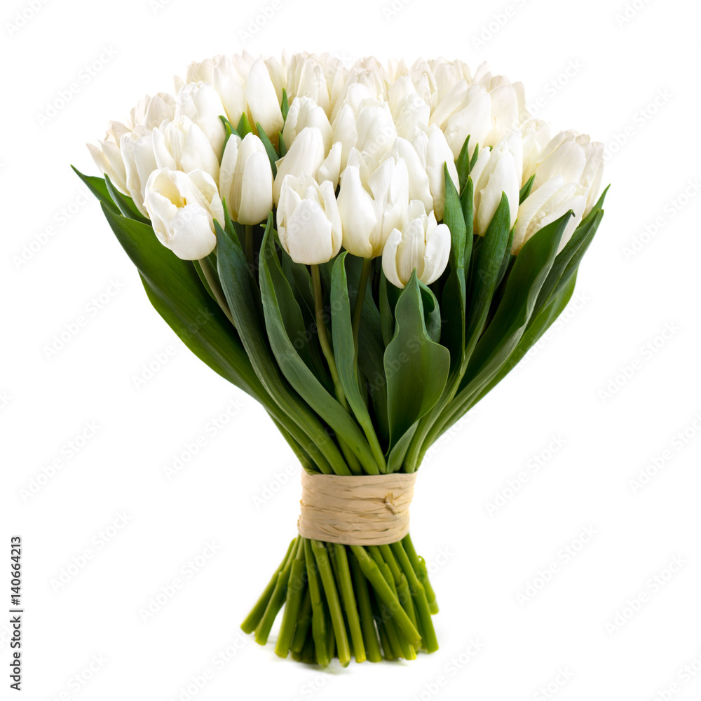 white tulips isolated on white