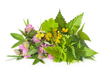 Herbs Nettle, Celandine, Red C...