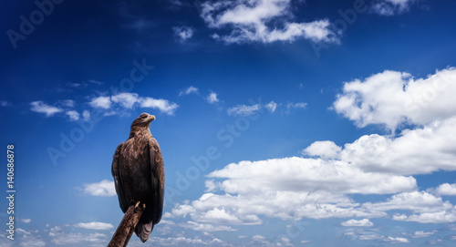 The eagle on the blue sky
