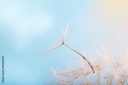 Dandelion on a background a bright blue sky