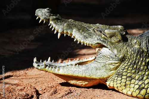 Foto op Plexiglas Krokodil Profile of a crocodile taking a sunbath