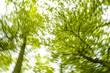 Baumimpressionen, Laubwald, Froschperspektive, Österreich, Nied