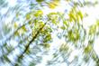 Baumimpressionen, Auwald im Frühjahr, Österreich, Niederöster