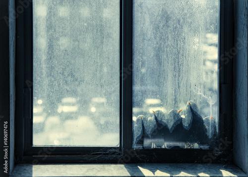 Photo  birds bask on the window