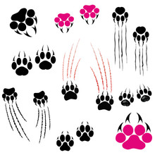 Footprints Of A Big Cat. Panther Or Tiger Traces. Vector Clipart