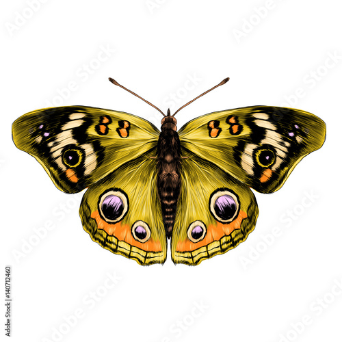 Fototapeta butterfly with open wings top view of symmetry, sketch the graph of vector color drawing, butterfly with yellow wings